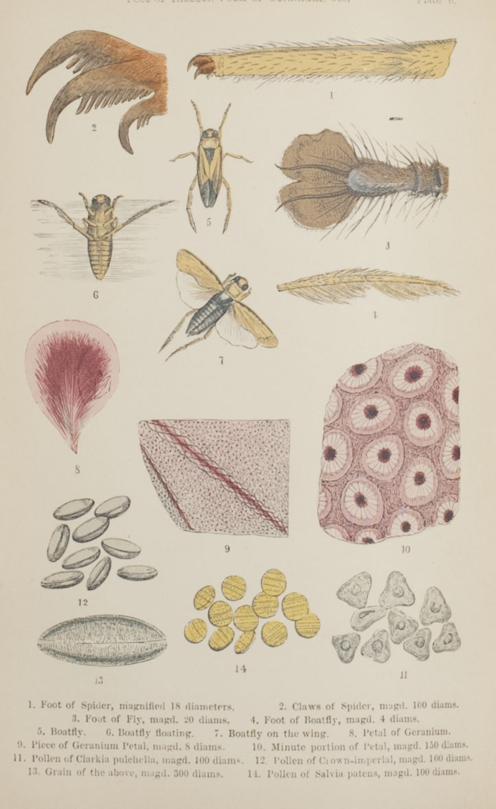 Plate 1