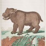 Hippo print from Quadrupedia
