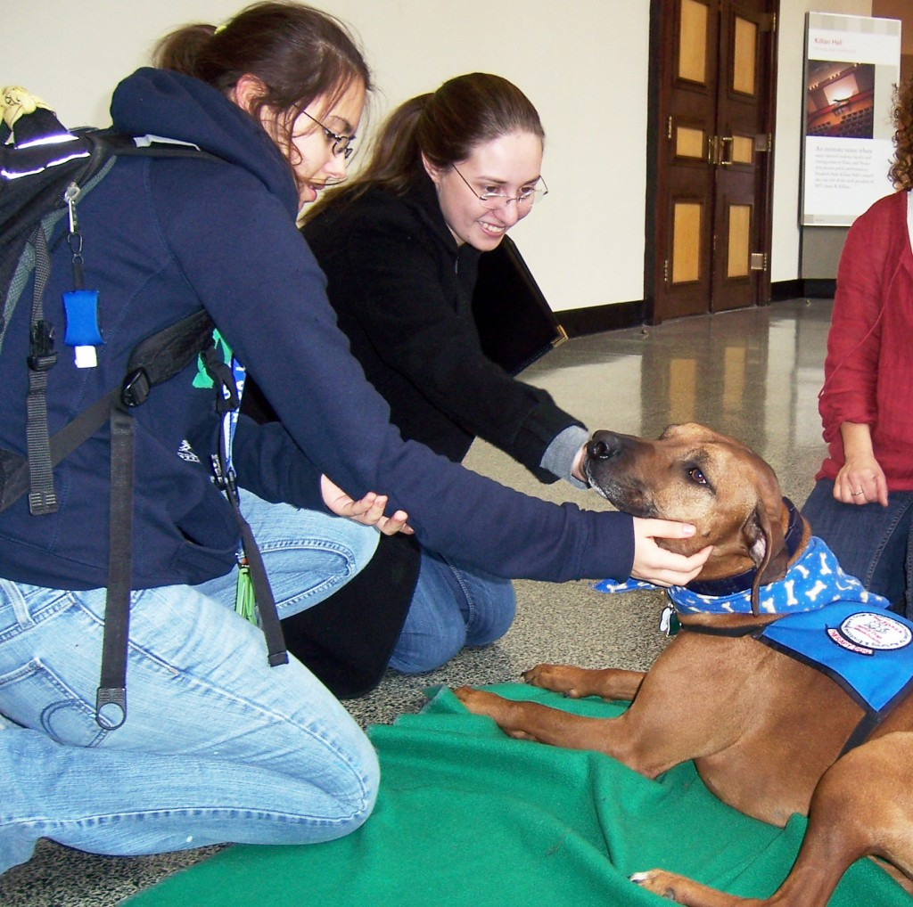 therapy dogs at MIT2013