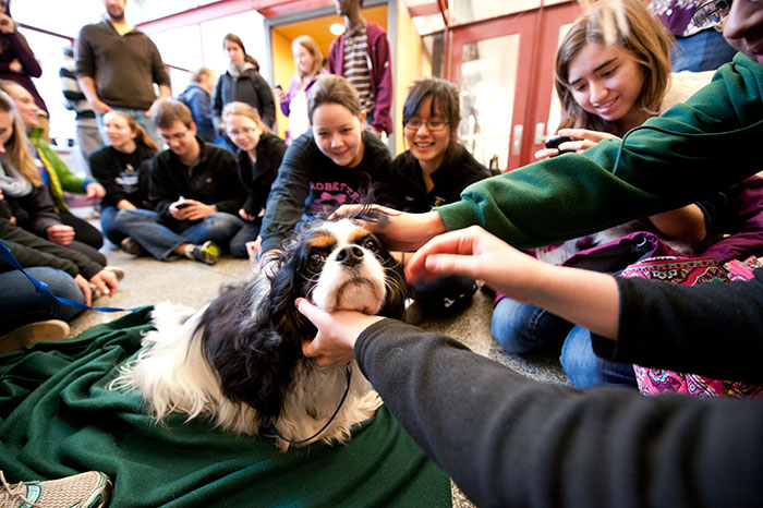 photo of therapy dogs