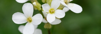 TAIR brings Arabidopsis Thaliana data to you