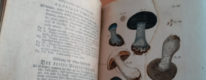 Digging deep into Special Collections