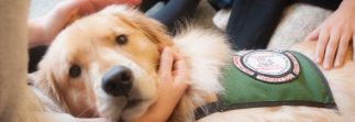 Could your dog be a therapy dog?